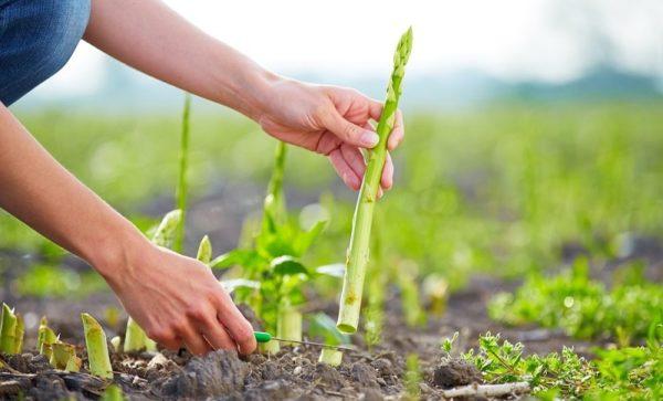 Munca în agricultură